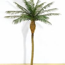 Phoenix-palm 200cm