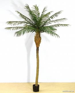 Phoenix-palm 200cm -