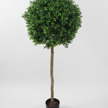 Boxwood Ball Tree 125cm