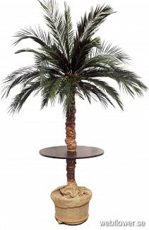 Palmbar 240cm -