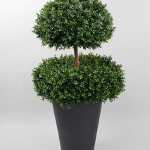 Boxwood 2 head 140cm