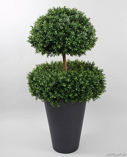 Boxwood 2 head 140cm -