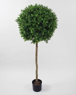 Boxwood Ball Tree 125cm - Styckpris