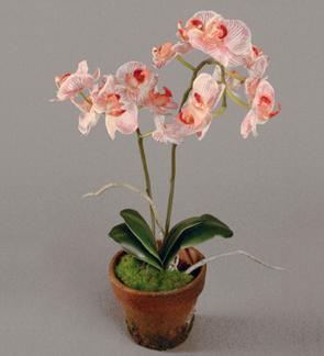 Orkidè Phalanopsis 55cm -