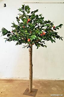 Äppelträd Kivik 260 cm -
