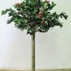 Äppelträd Kivik 260 cm