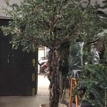 Mega Olivträd 350 cm
