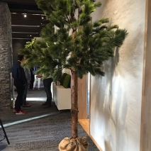 Tall träd med äkta stam 230 cm