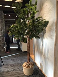 Tall träd med äkta stam 230 cm -