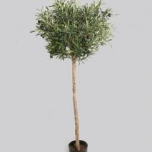 Trendigt Olivträd 140 cm