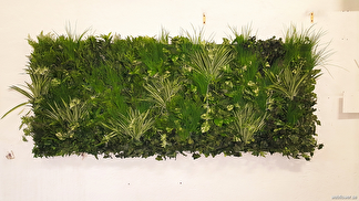 Växtvägg med gröna växter 100cm -