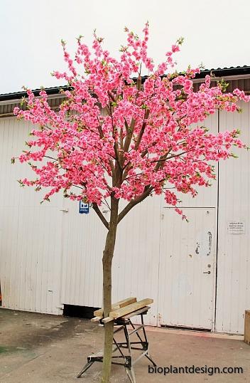 Körsbärsträd med äkta stam 350 cm ny bild