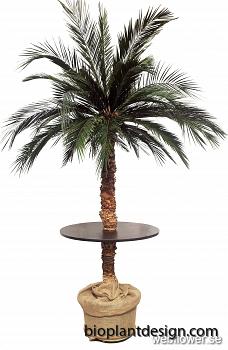Palmbar med tre behållare 240 cm