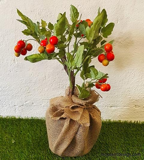 Körsbärstomater i jutvävskruka klar