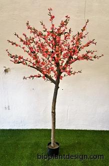 Körsbärsträd med äkta stam 180cm ny bild