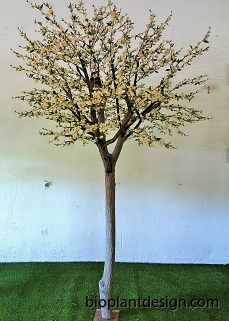 Körsbärsträd med äkta stam