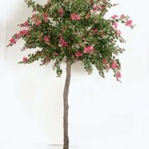 Bougainvillea Träd 280 cm