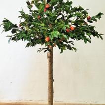 Äppelträd med äkta slät stam