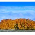Höst/ Autumn 4