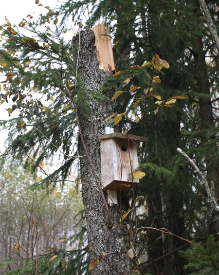 Kommunen har satt upp fågelholkar i träden längs med Älvpromenaden. Träd som går av eller faller får ligga kvar och bli till livsrum för insekter, som blir mat till fåglarna.