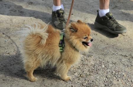 Många fötter att hålla koll på för en liten vovve.