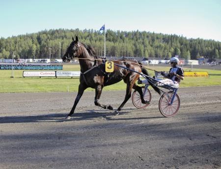 Nadal Broline med Ulf Ohlsson i sulkyn.
