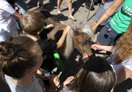 Kändishästen Vinnie var populär.