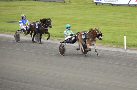 Årjängs Lilla Sprinterlopp har startat, häst nr 11 Eragon leder före nr 3 Lacerta.
