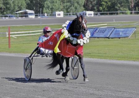 Vinnare i loppet Erik Perssons Memorial - kallblodshästen Flex med Torbjörn Jansson i sulkyn.