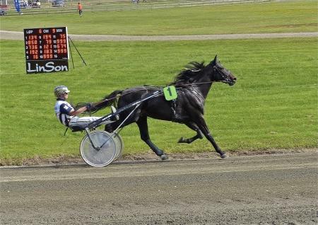 Häst - Mårten Marje, kusk - Paw Mahony