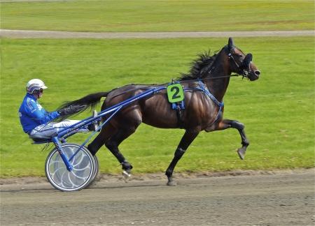 Häst - Junior Troy, kusk - Olle Goop