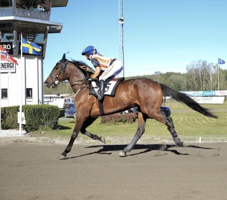 Bonnies Celebrity med Tova Bengtsson i sadeln.