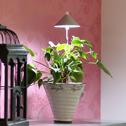 SUNLiTE växtlampa - Underhållsljus för växter där solljuset inte räcker till - Sunlite växtarmatur Grafitgrå
