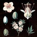 Servetter sköna Ting - Servetter mandel/rävkaketräd