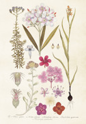 Poster vintage hortensia detaljer, 35x50 cm