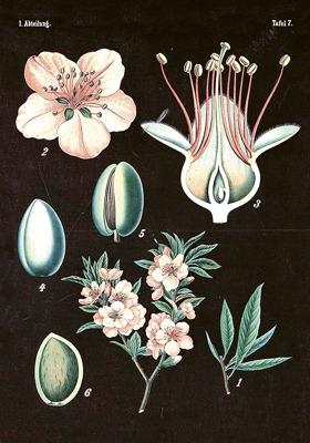 Poster vintage mandel-svart, 35x50 cm - Poster vintage mandel-svart