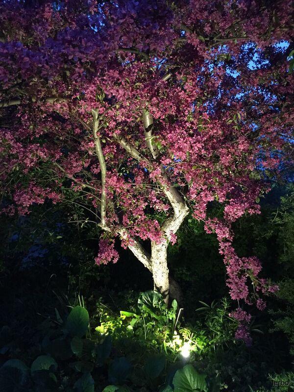 luna träd 2