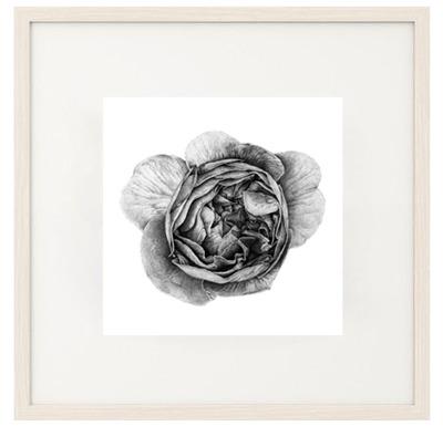 Art Print Svart Ros Design Emma Sjödin - Art Print Svart Ros