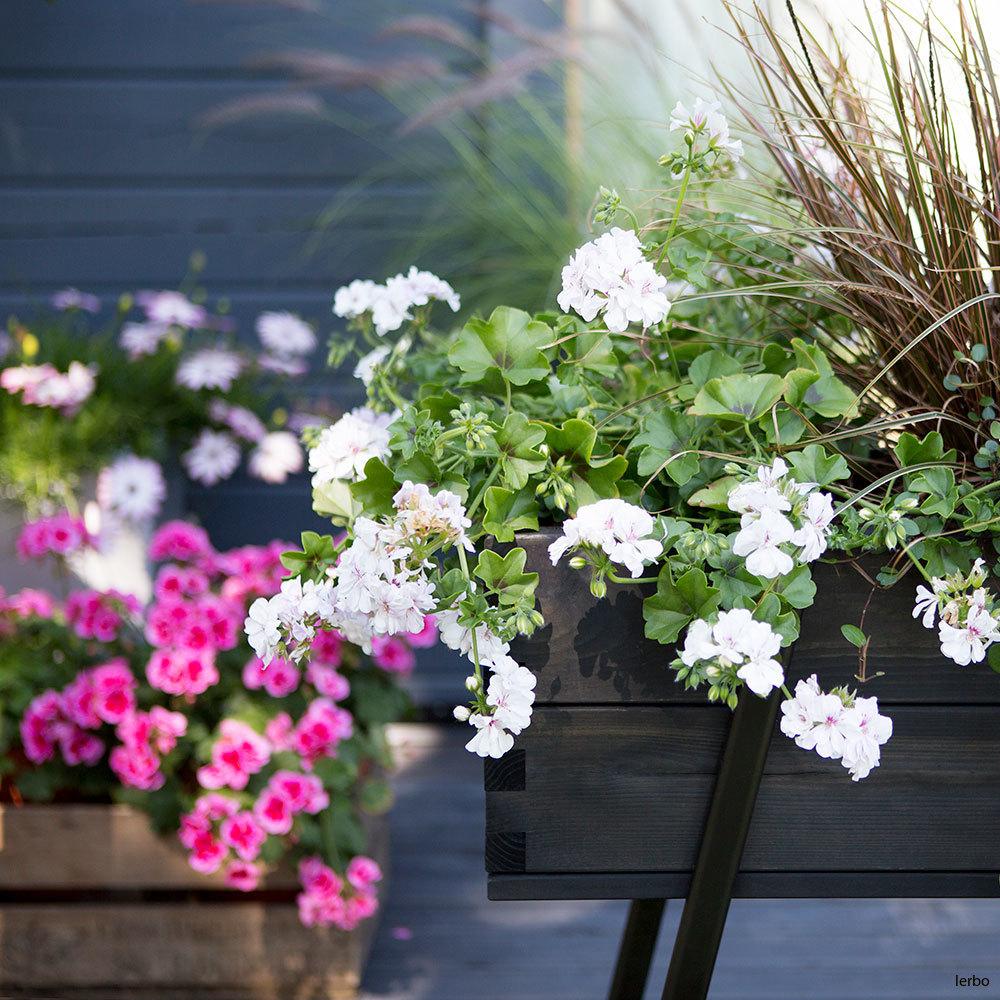 växtnäring-blommande_2