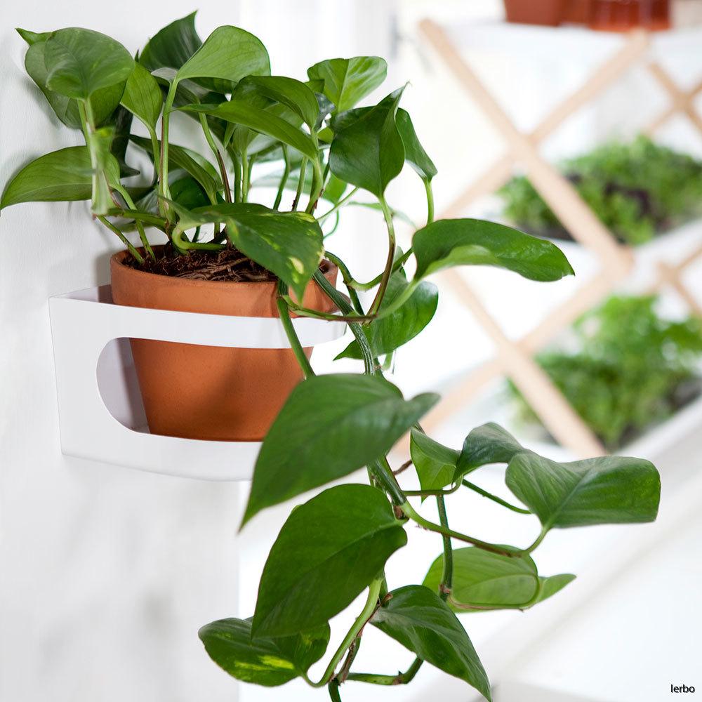 växtnäring-grönska-HFG-2