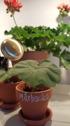 Krukset för plantering eller bakning