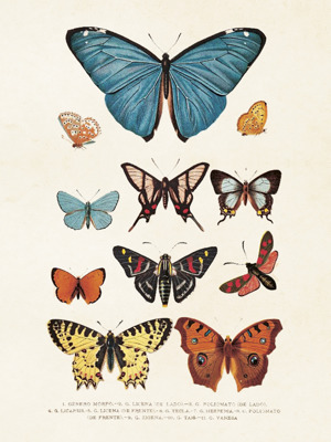 Poster vintage fjärilar, 18x24 cm Sköna Ting - Poster vintage fjärilar, 18x24 cm Sköna Ting