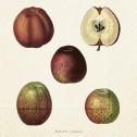 Servetter sköna Ting - Servetter äpplen