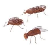 Insekter i rost