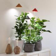 SUNLiTE växtlampa - Underhållsljus för växter där solljuset inte räcker till