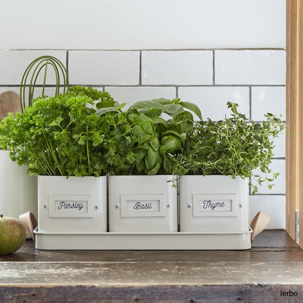 burkar för kryddväxter med växter i