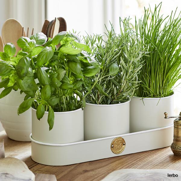 kryddkrukor med växt