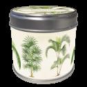 Doftljus - Doftljus cocos lime