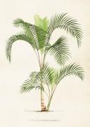 Poster vintage palm, 50x70 cm