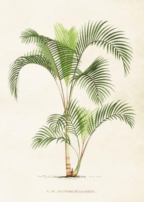 Poster vintage palm, 50x70 cm Sköna Ting - Poster vintage palm, 50x70 cm Sköna Ting
